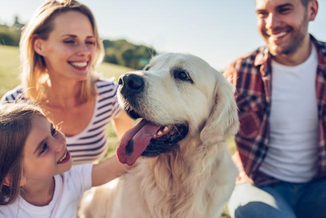 6 endroits où aller avec le chien de la famille cet été