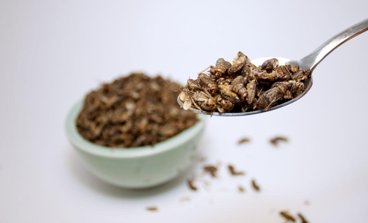 Insectes: 4 raisons pour essayer cette super source de protéine