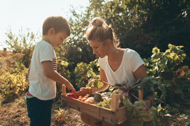 7 aliments qui peuvent être toxiques (s'ils sont mal apprêtés)