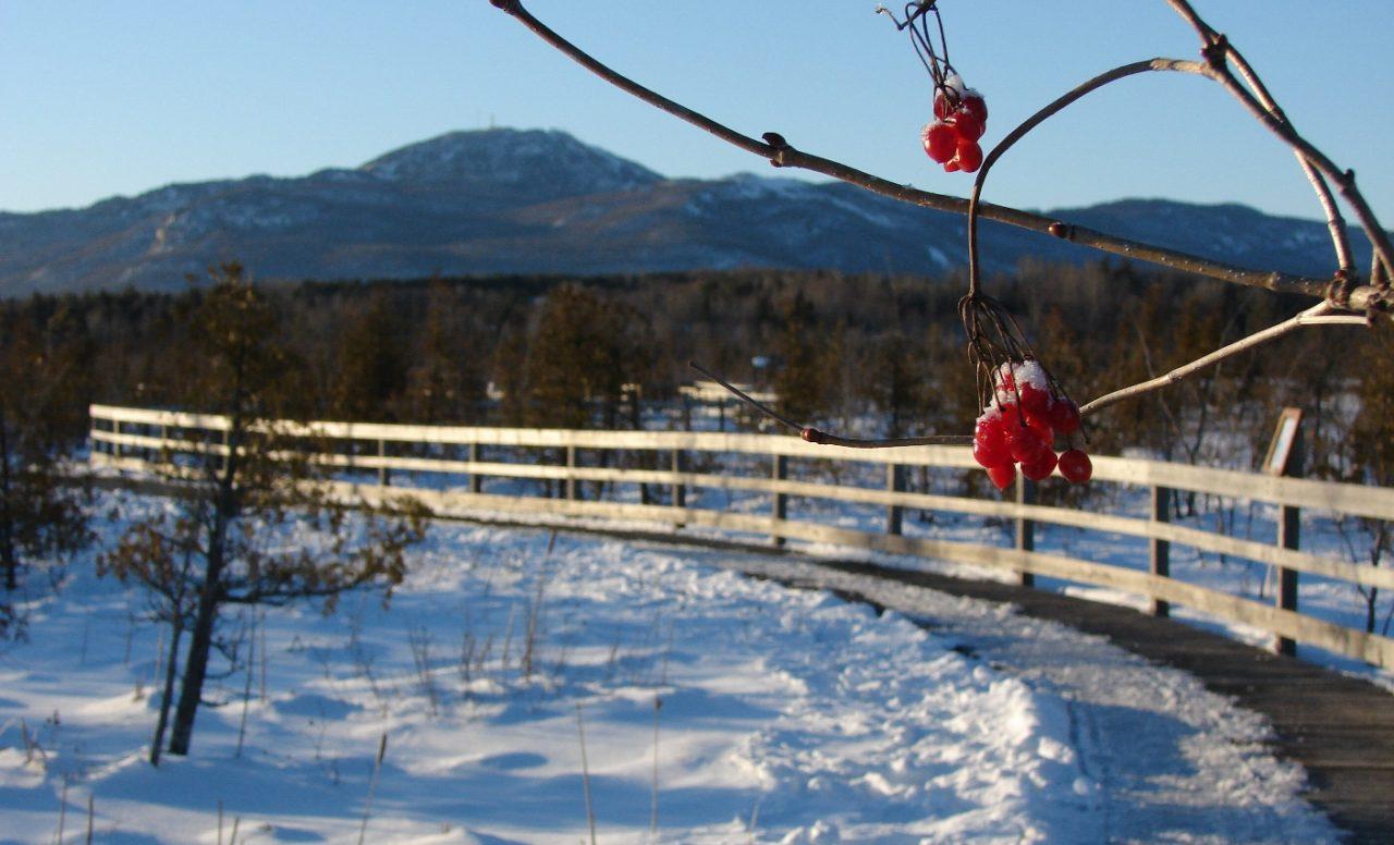 Les plus beaux sentiers où marcher cet hiver: 6 destinations