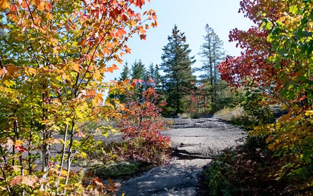 parc-val-david-automne-arbres-couleurs