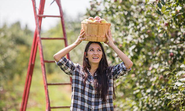 Une femme dans un verger avec un panier de pommes sur la tête