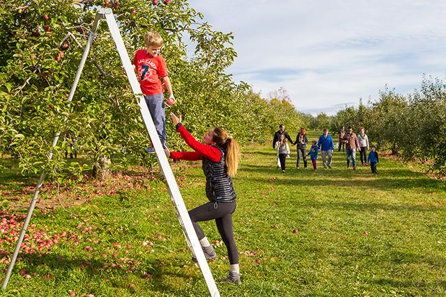 Des enfants grimpent dans une échelle dans un verger