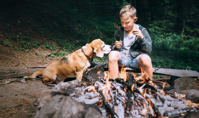 enfant et chien dans un terrain de camping