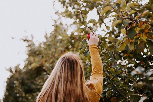 Faire de l'autocueillette de poires, pommes, framboises, courges