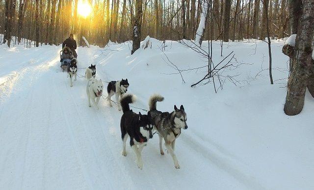 Promenade en traineau à chiens