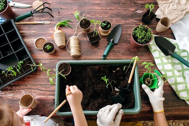 Jardin : comment faire des semis intérieurs avec les enfants