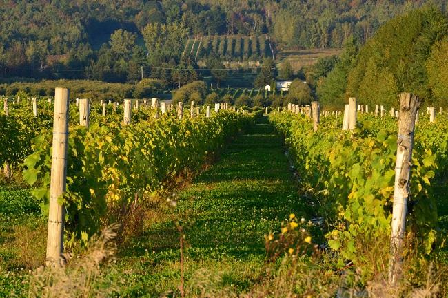 Vacances-monteregie-routes-des-vins