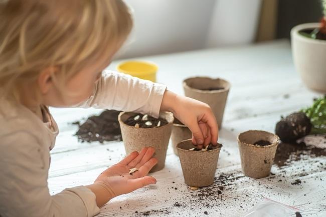 Potager et jardin : petit guide pour faire des semis en famille