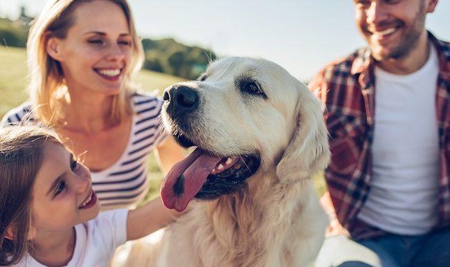 Randonnee-pedestre-avec-son-chien-sentiers-coups-de-cœur
